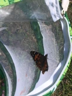 First Grade Butterfly Release